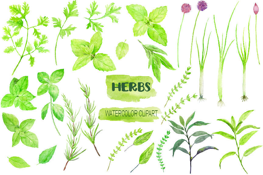 Herb clipart, watercolour herb illustration, mint, chive, rosemary, sage,