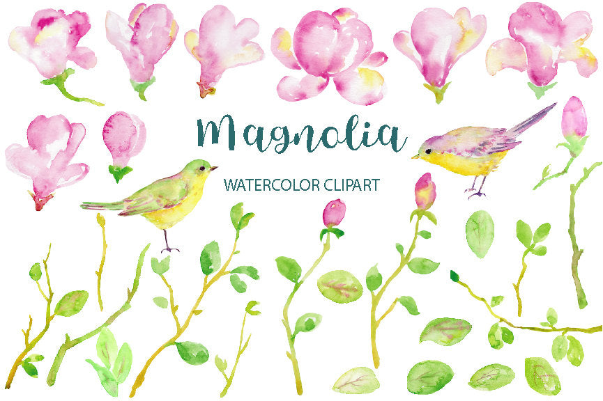 watercolour magnolia, pink flower, leaf, branch, birds, magnolia clipart