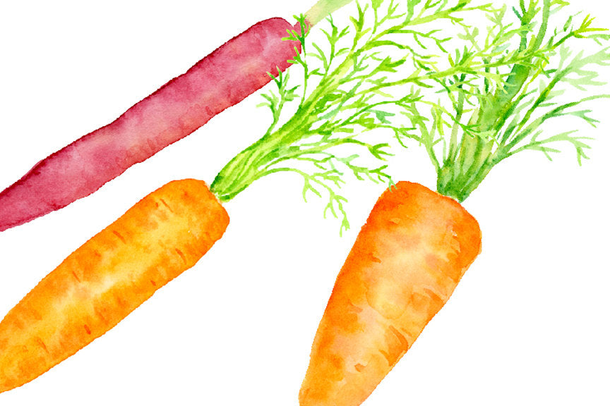 watercolour clipart, carrot illustration