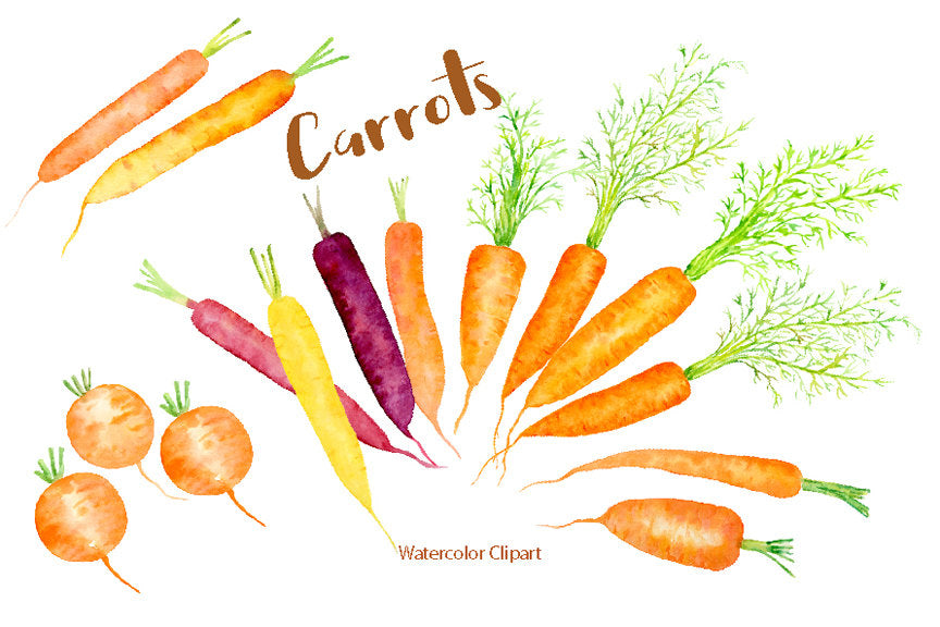 Hand painted watercolor carrots, rainbow carrots, heritage carrots, root vegetables for instant download.