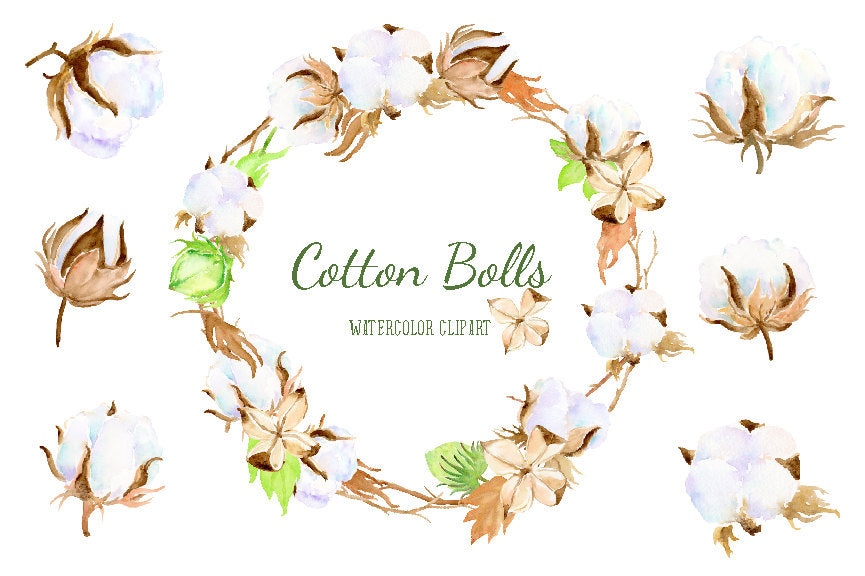 Watercolor cotton boll clipart, cotton illustration, cotton branch