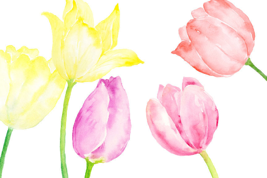 watercolour tulips and spring bulbs for instant download