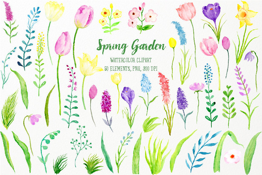 watercolor clipart spring garden,  tulips, daffodils, purple flowers