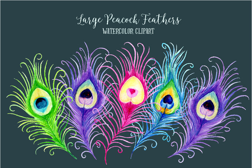 watercolor peacock feather clipart, peacock illustration, wedding illustration, boho feathers