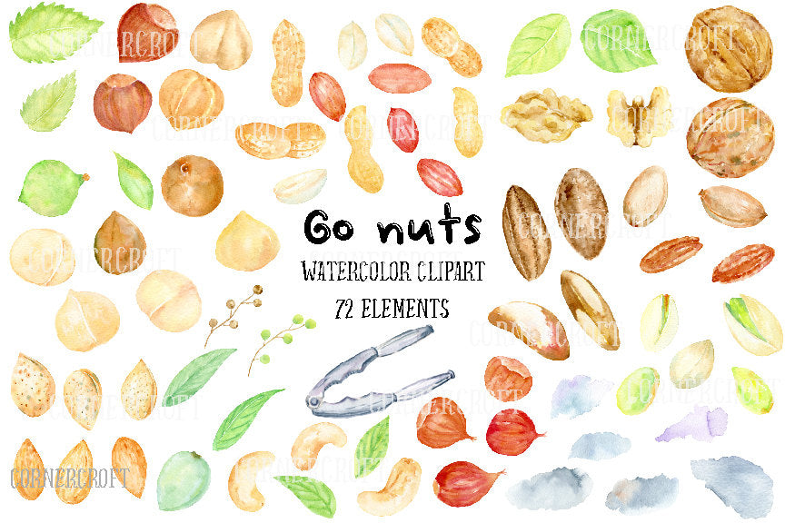 watercolor clipart go nuts, nut illustration
