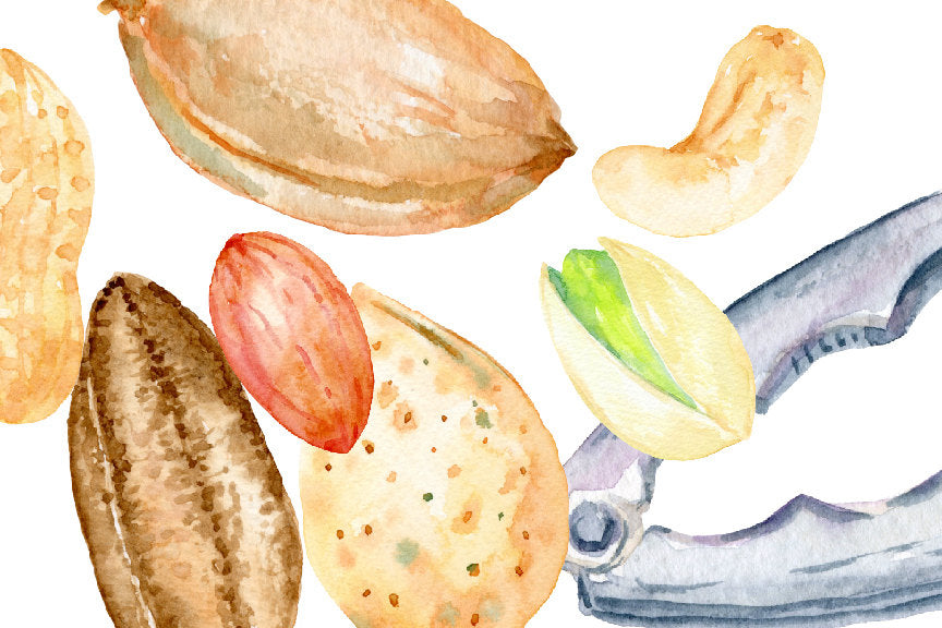 watercolor nut illustration, food, watercolor food, watercolor clipart go nuts