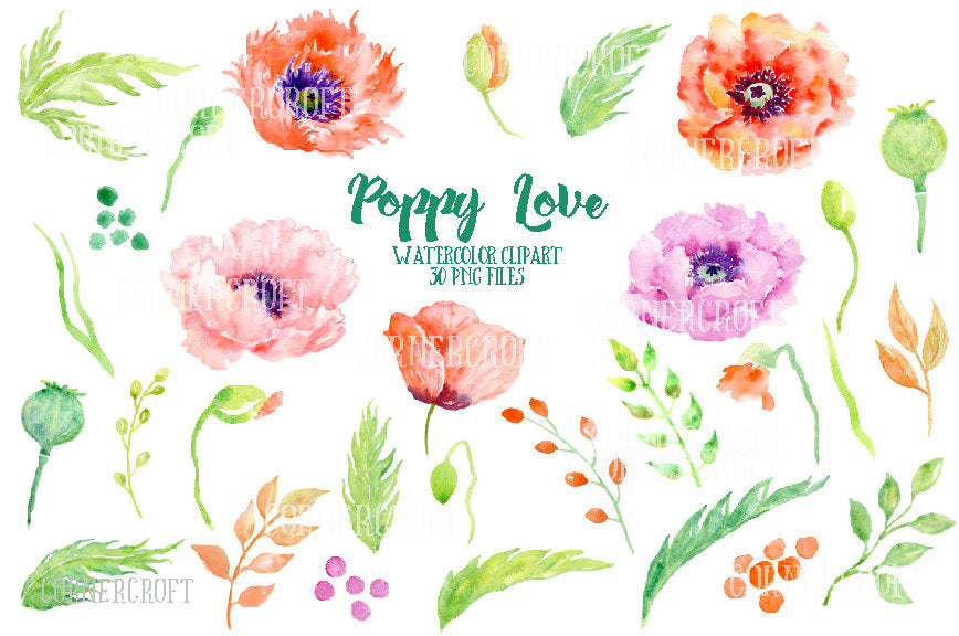 hand painted watercolor poppy, orange and red poppy,