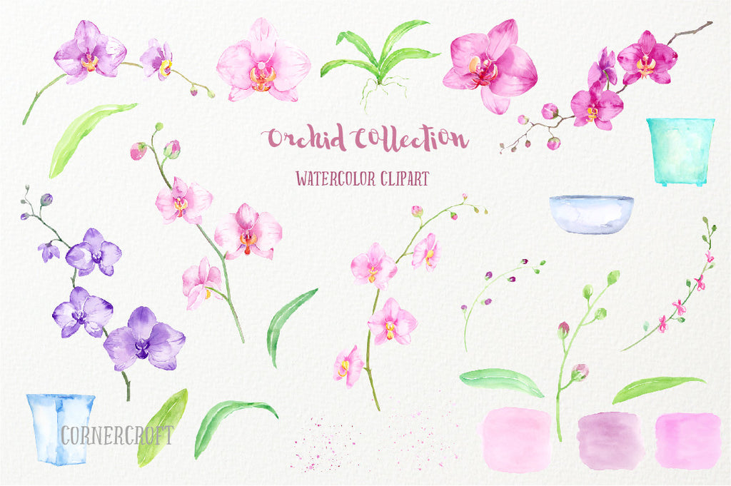 Hand painted watercolor clipart Orchid Collection, pink orchid, purple orchid, moss orchid, pot plant art print