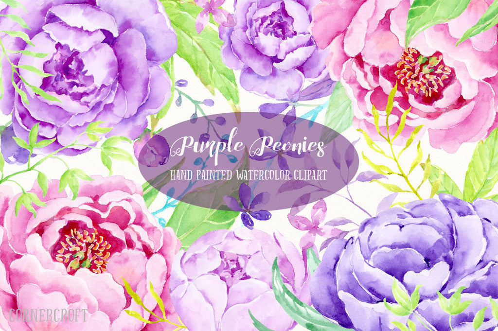 pink peony, purple peony, watercolor detailed illustration of peony