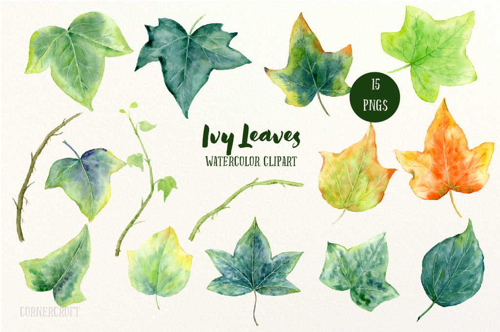 watercolour ivy leaf illustration, leaf clipart