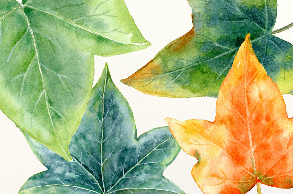watercolor ivy leaf element for instant download