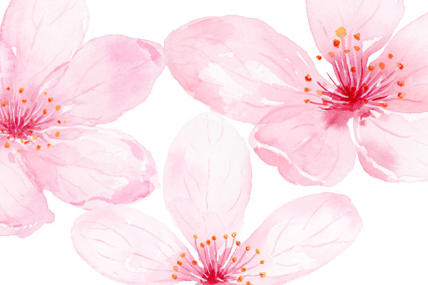botanical illustration of pink cherry flowers. Corner Croft artwork