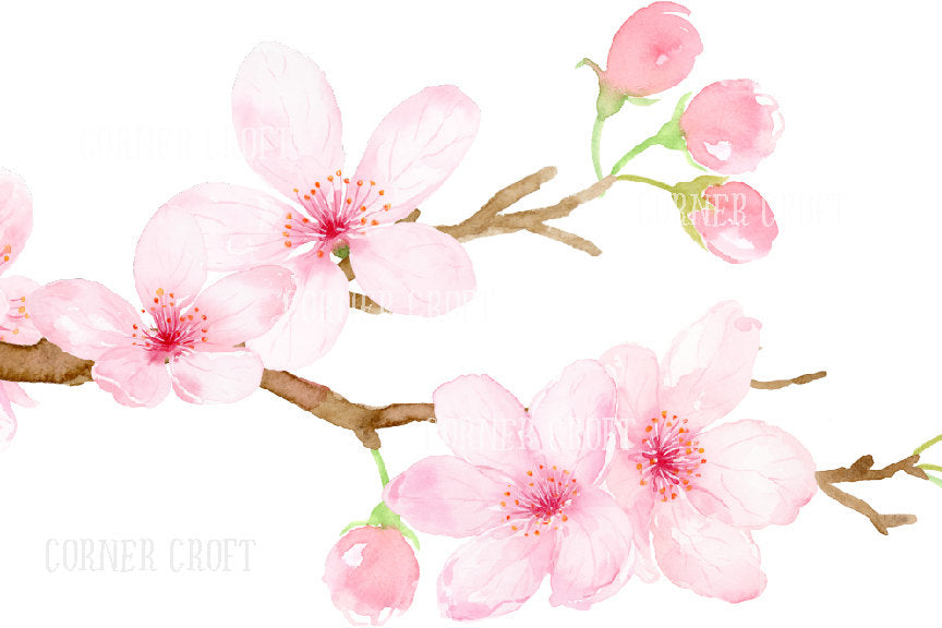 Watercolor cherry branch, pink flowers, corner croft watercolor graphics.