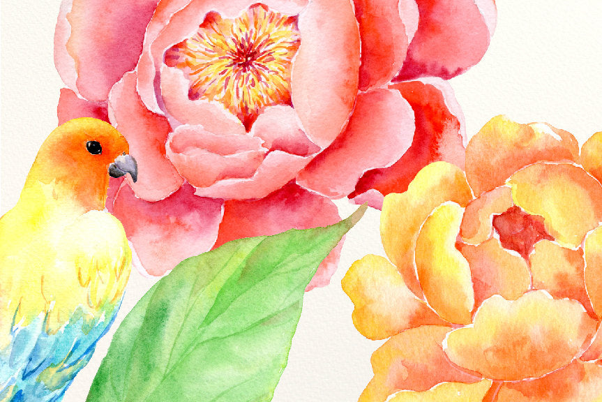 watercolor collection passion, watercolour peony, yellow peony, peony clipart, instant download