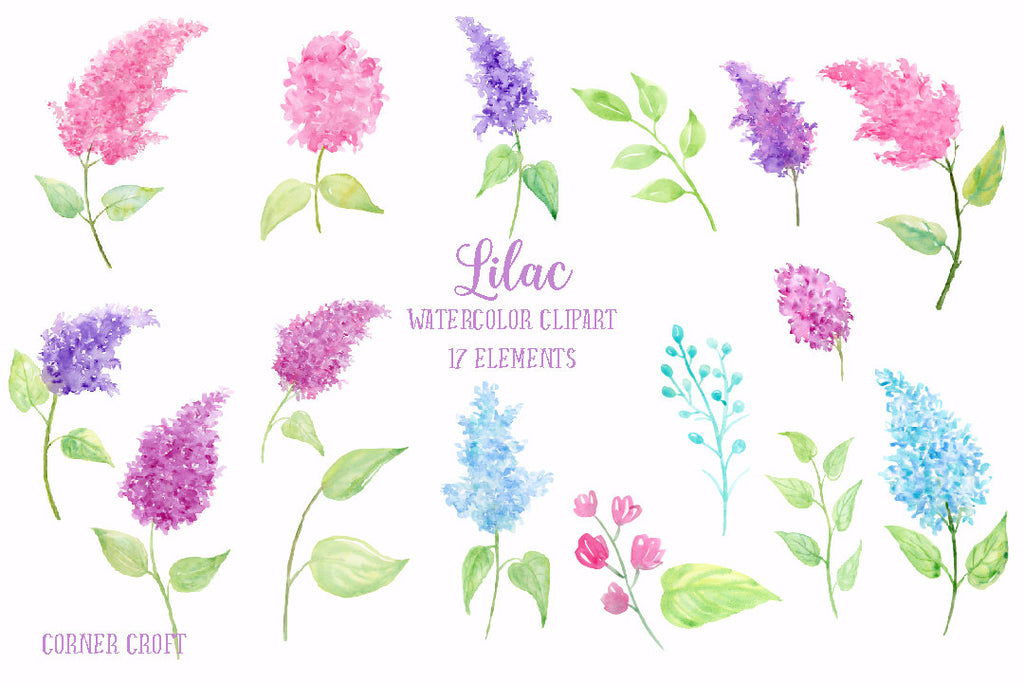 watercolor clipart of lilac, abstract lilac, watercolour lilac illustration