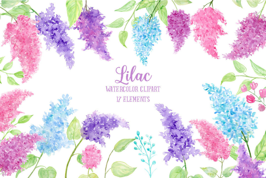 watercolor illustration of pink lilac, blue lilac and purple lilac flower