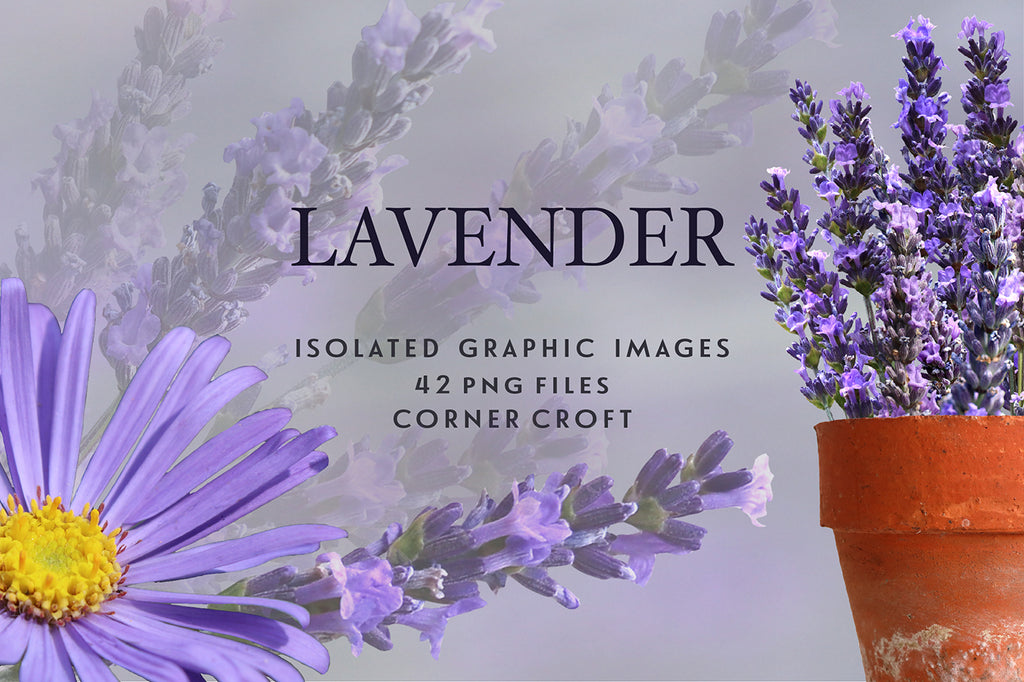 lavender clipart, purple flower, herb lavender, instant download