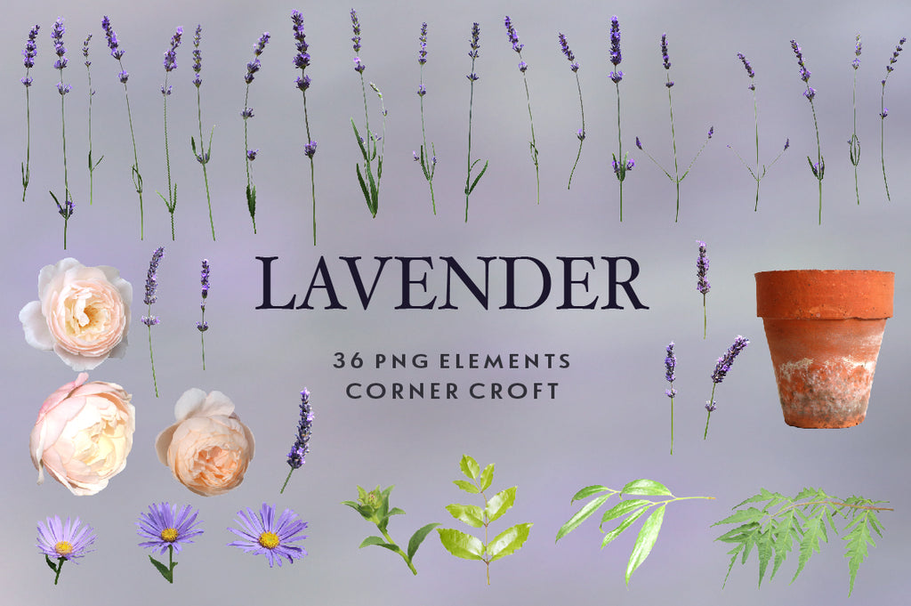 lavender, daisy and rose, isolate images instant download