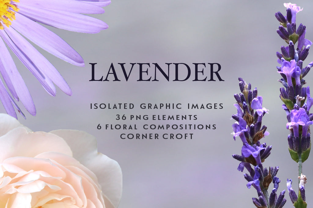 Lavender clipart,  isolated lavender graphics, sprig of lavender, instant download