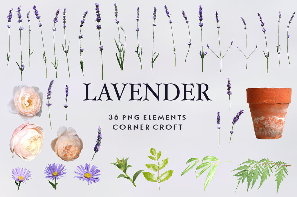 lavender images on transparent background, digital files for instant download