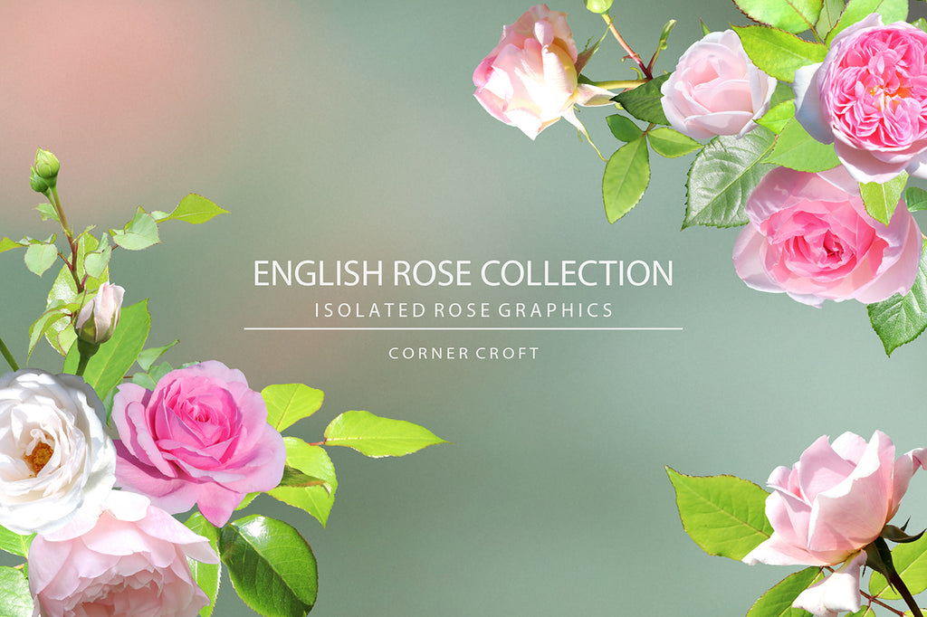Rose bundle, rose collection, English rose collection, isolated rose, design objects, rose pattern, instant download