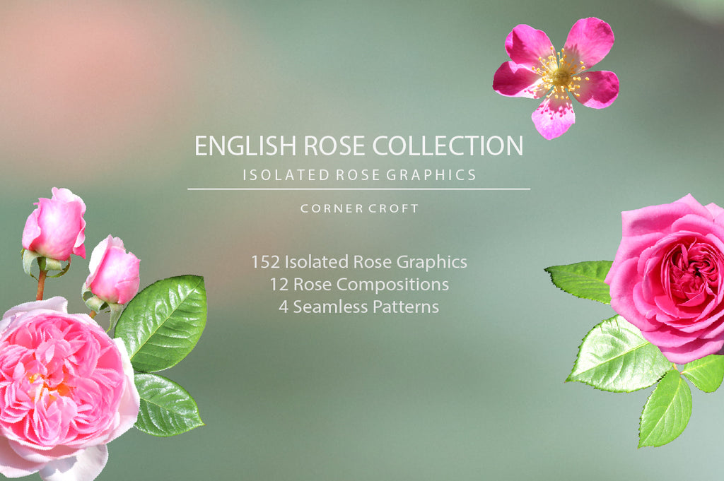 rose graphic, isolate rose objects, wedding invitation, graphics design, social media design
