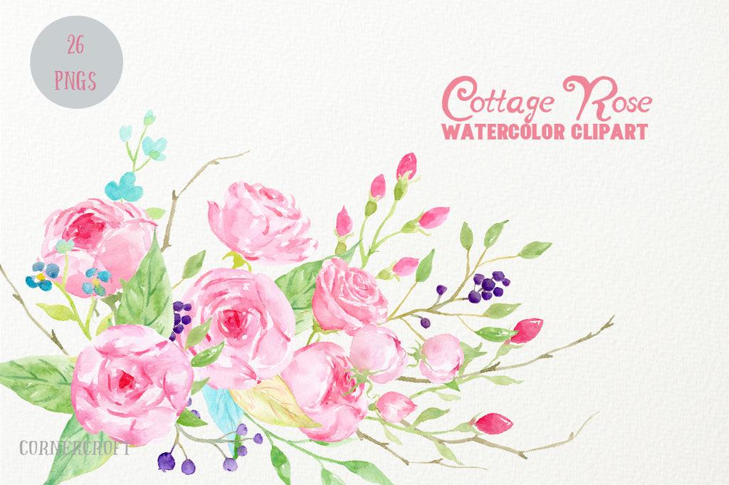 watercolor cottage rose collection, pink rose illustration