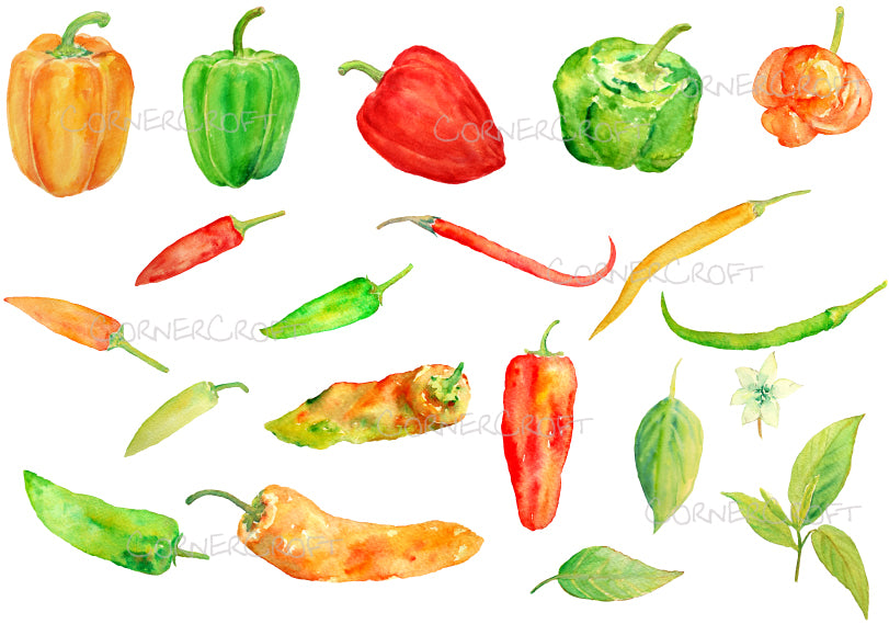 watercolor clipart chillies, chilis, peppers, peper illustration, corner croft artwork