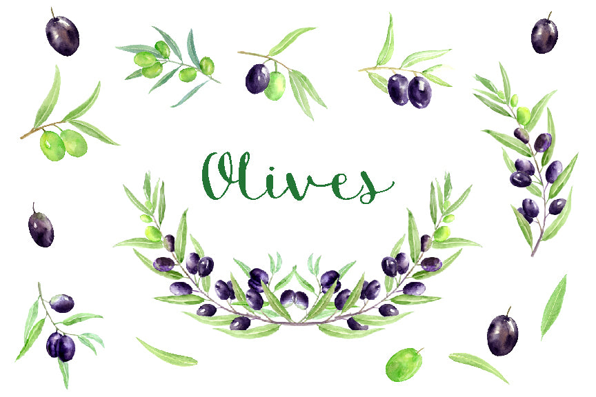 olive clipart, watercolor olives, olive illustration, detailed watercolor olive.
