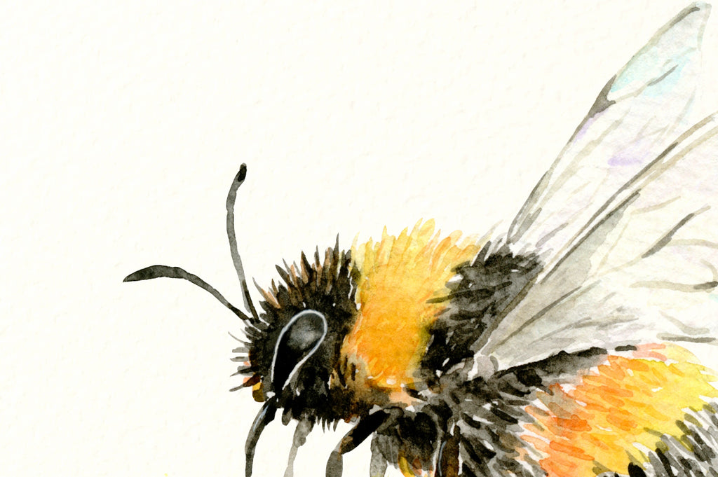 watercolor art print busy bee, flying bee.