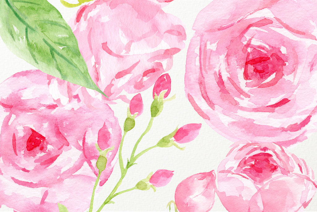watercolor rose collection, rose illustration, pink rose instant download