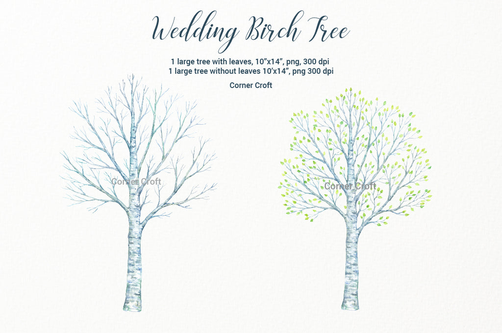 watercolor large birch tree, bare birch tree, digital download, birch clipart