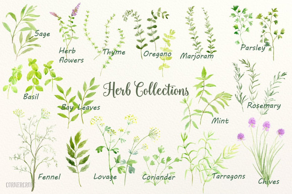 Watercolor herbs print basil, mint, parsley, bay leaves, chives, thyme, sage and rosemary branches, marjoram, oregano, lovage, coriander and tarragons, pots and basket for instant download.