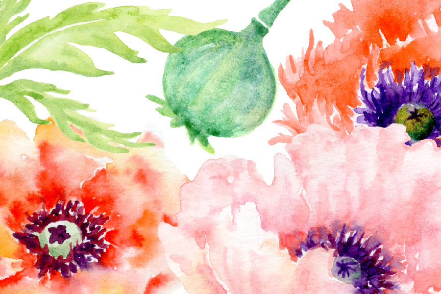 watercolor poppy illustration, orange and red poppy bundle. watercolour collection