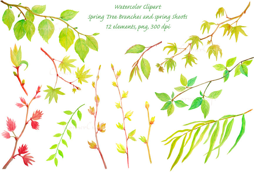 watercolor clipart spring tree branches, beech, acer, maple and willows and more.