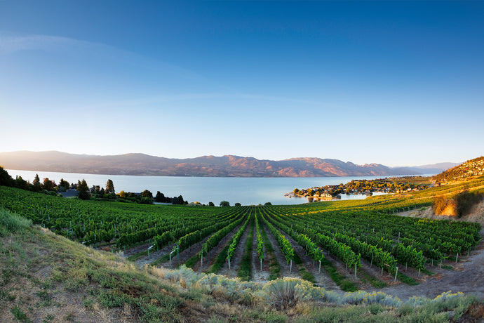 Quails Gate Winery Okanagan Lake View