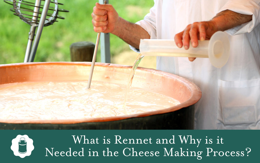 What is Rennet and Why is it Needed in the Cheese Making Process?
