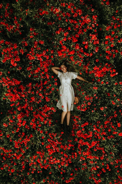 Woman in white lyeing in a field of red roses