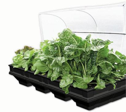 Vege-Pod Large W/Cover