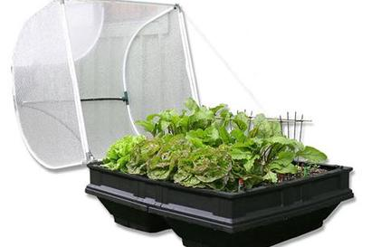 Vege-Pod Medium W/Cover