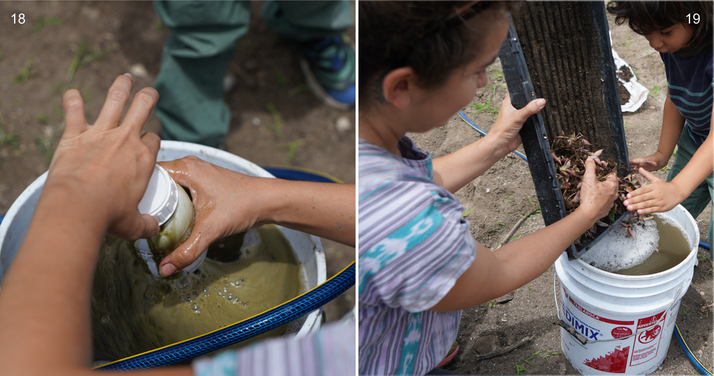 Copita field - agave bacterial bath for picudo protection