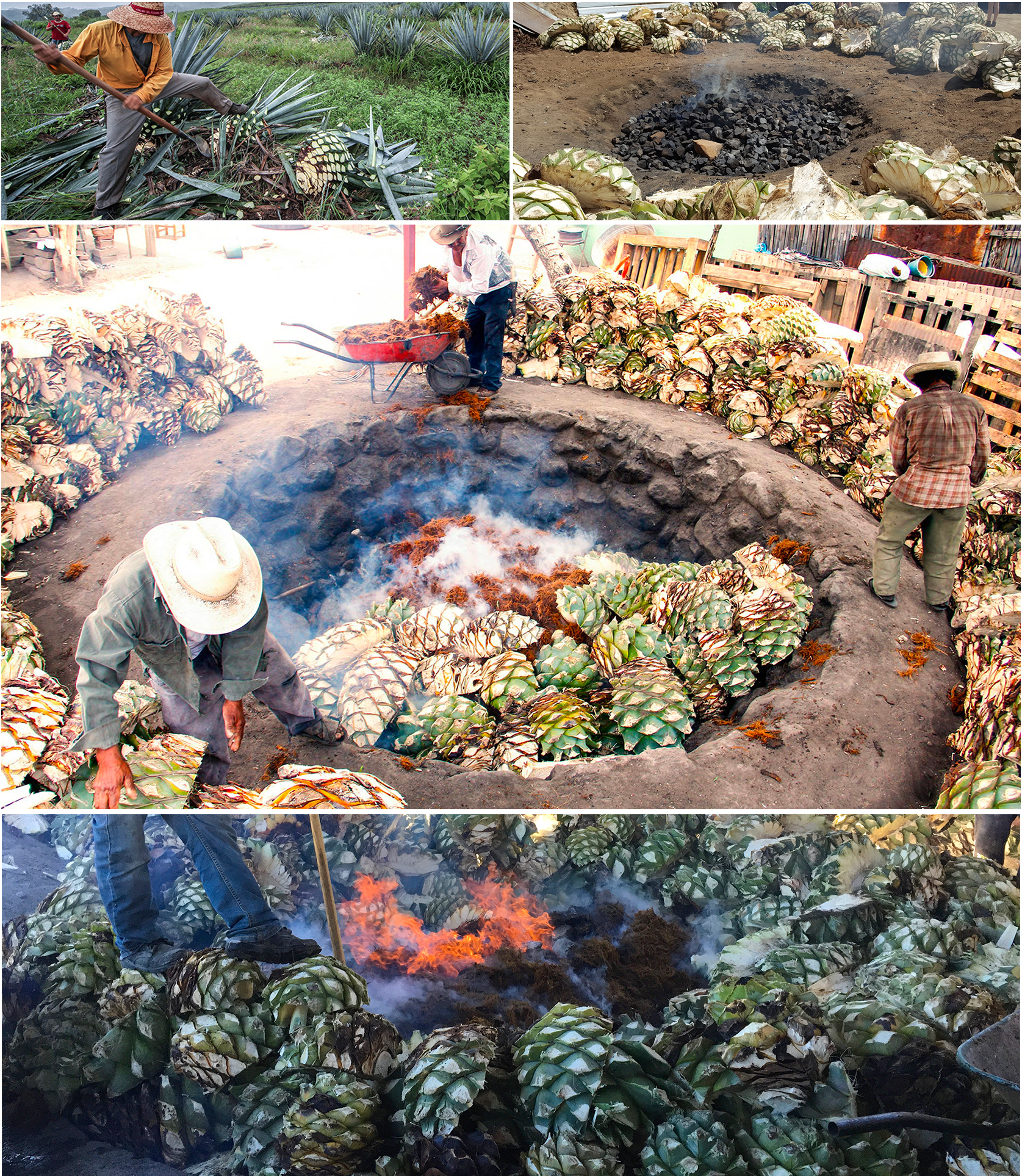 cooking agave for mezcal - jimador - conic stone oven