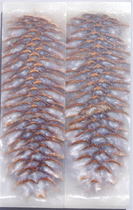 "RESIN SPRUCE CONE SCALES 3/8"" x 1 1/2"" x 5"" WHITE"
