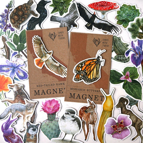 California wildlife, plant, flora, botanic, animal magnets