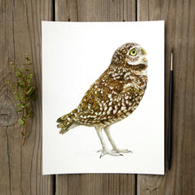 Burrowing Owl 8x10 Print - Native California Wildlife, Bird Print, Owl, Birder gift