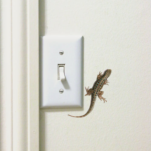 Western Fence Lizard Wall Decal
