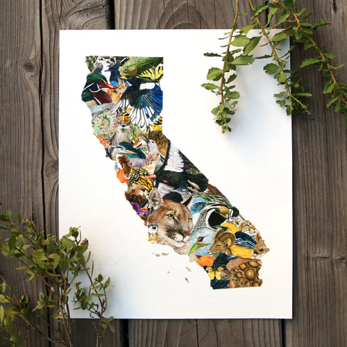 California Wildlife 8x10 Poster - California Biodiversity Art