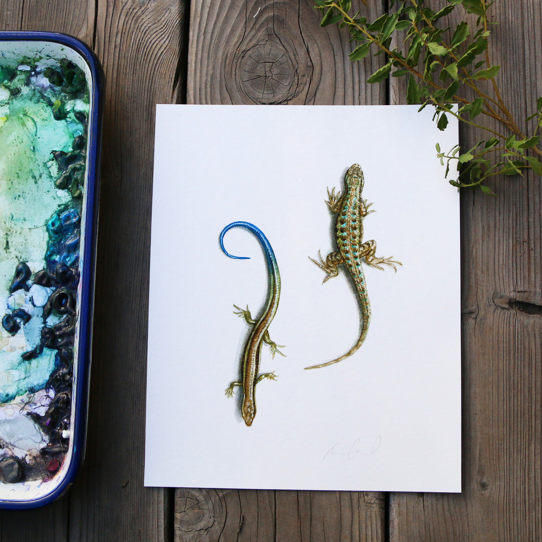 Fence Lizard and Skink 8x10 Print - Native California Wildlife, reptile watercolor print