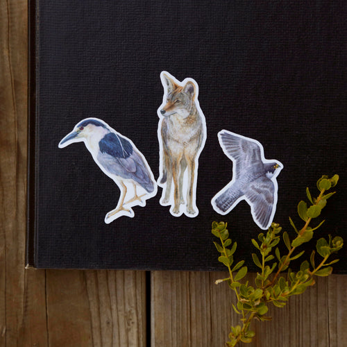 Urban Encounters Sticker Set: Three Vinyl Stickers, Coyote, Black-Crowned Night Heron, Peregrine Falcon