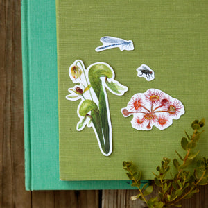 Carnivorous Plants of California Sticker Set: Four Vinyl Stickers, Darlingtonia, sundew, insects